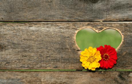 לב לומד אהבה