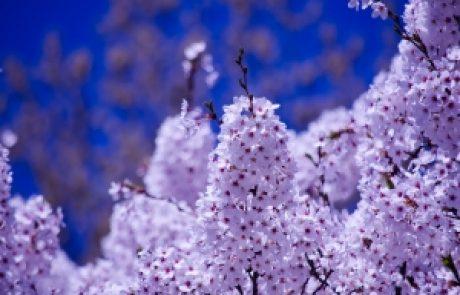 הרב מיכי יוספי – גן הנשמות
