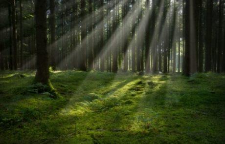הרב עופר ארז – ביער (בן מלך ובן שפחה שנתחלפו 6 המשך)