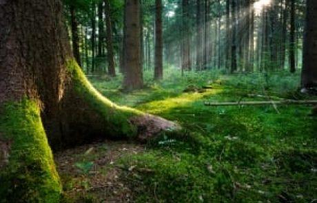 הרב שלום יוסף ברבי – עצב ושמחה – איך מפרידים ביניהם