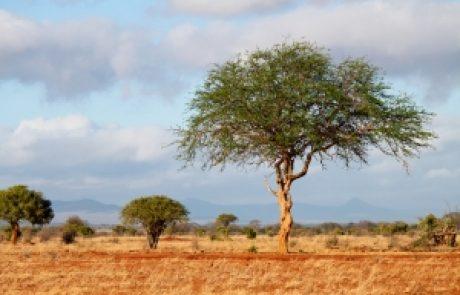 מיכי יוספי – כי האדם הוא עץ