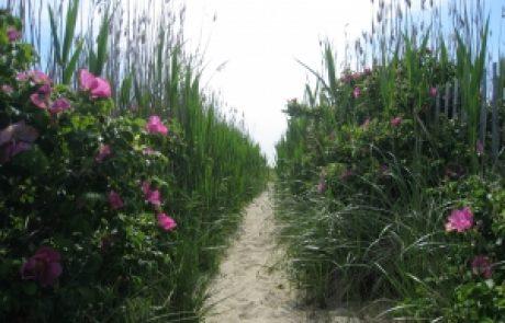 הרב שלום יוסף ברבי – לא לפחד כלל