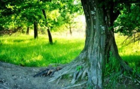 מיכי יוספי – הראייה המקיימת את הטוב