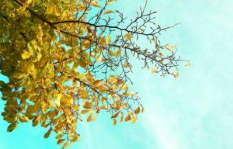 הרב שלום יוסף ברבי – הסתפקות במועט
