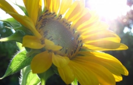 הרב שלום יוסף ברבי – התחלות וניתוקים מתאוות