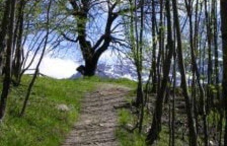 הרב מיכי יוספי – התבודדות