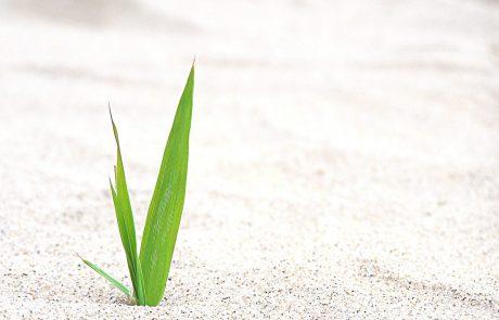 מטרת הנדודים במדבר | נקודה של אור | אייל בנימין קרוצ'י