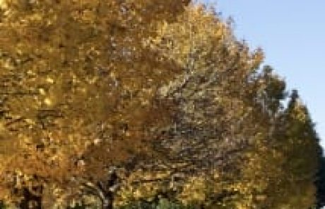 פרשת יתרו – מילים מצריות בעשרת הדיברות / ברק בצלאל